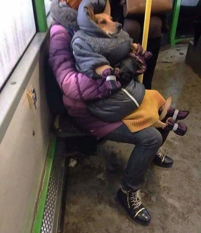 женщина держит на коленях собаку