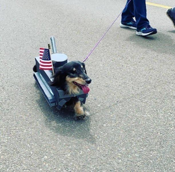 собачка с американским флагом
