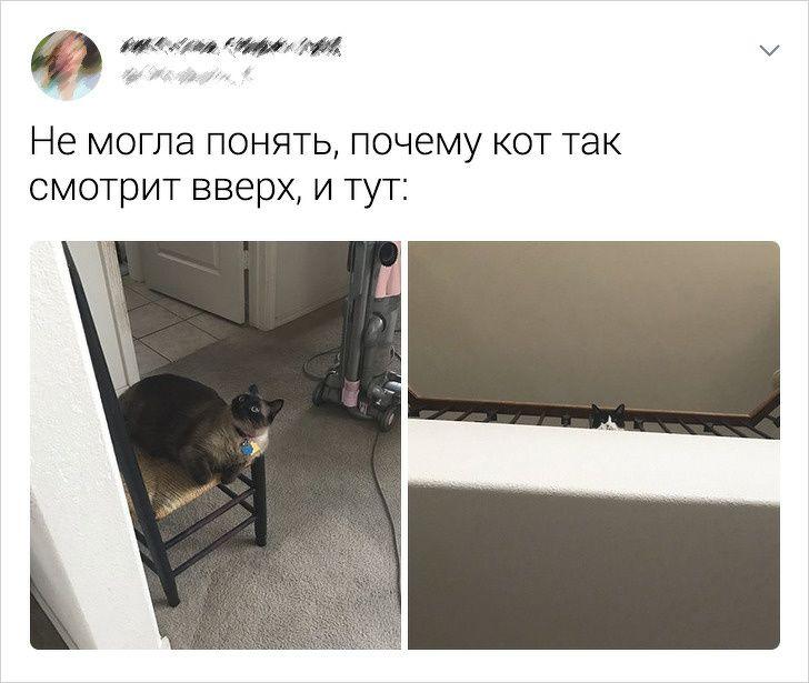 kotikov-tvitov-zabavnyh-kartinki-koshki-sobaki-smeshnye-zhivotnye-kote