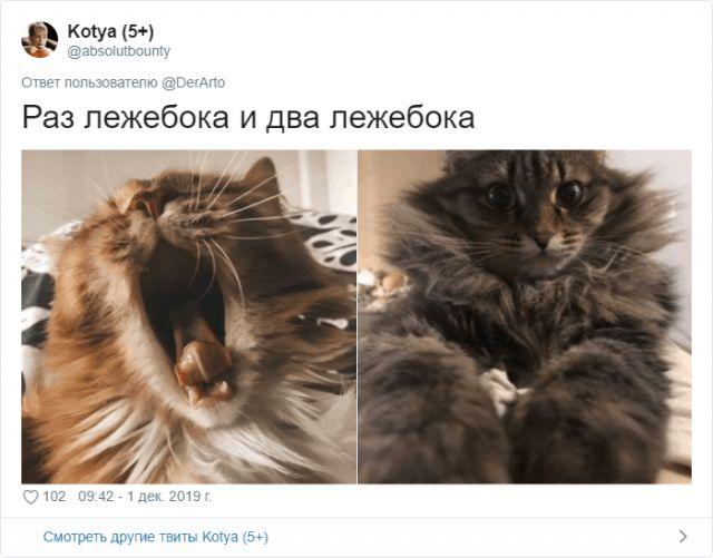 zhivotnye-zanimayutsya-pokazat-kartinki-koshki-sobaki-smeshnye-zhivotnye-kote