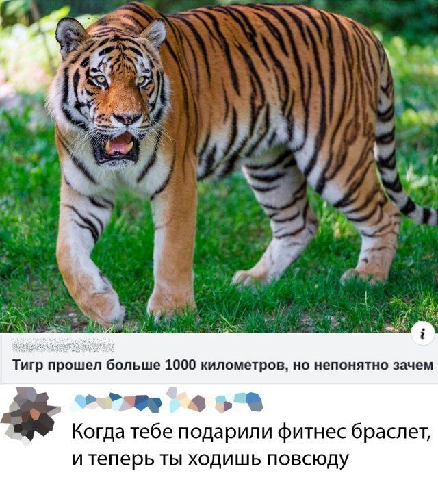 139950_97862.jpg