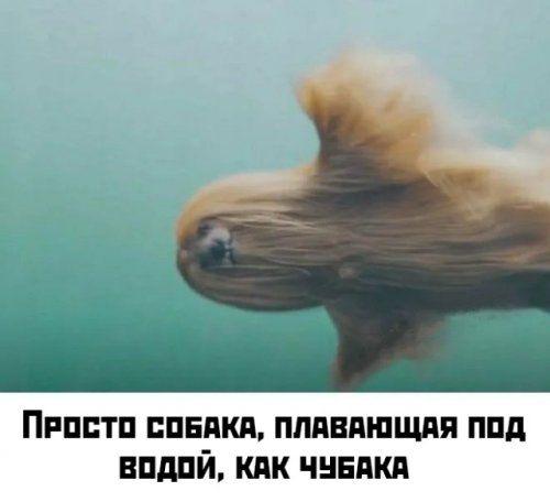 1576189581_kartinki-44.jpg