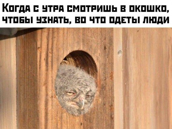 1576699431_1576595210_podb_vecher_14.jpg