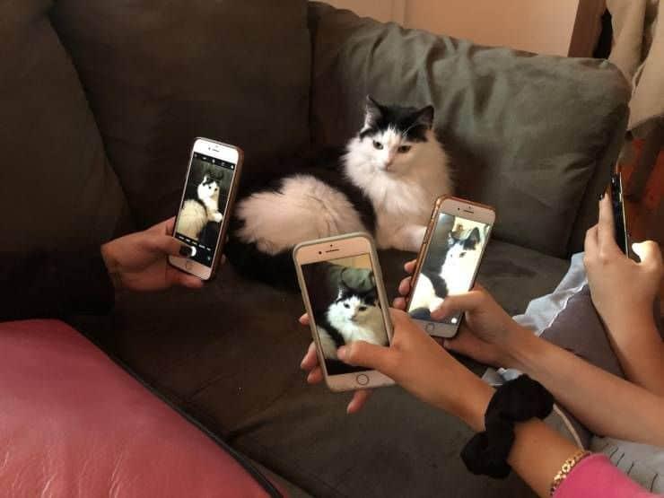 kartinok-prikolnyh-podborka-kartinki-smeshnye-kartinki-fotoprikoly