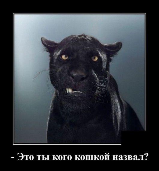 1576785562_1576677445_demotivatory_05.jpg