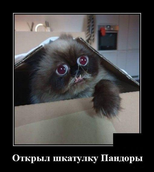 1576786314_1576768053_demotivatory_12.jpg