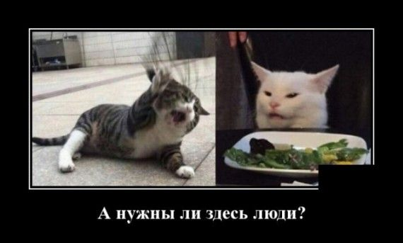1576786099_1576677414_demotivatory_20.jpg