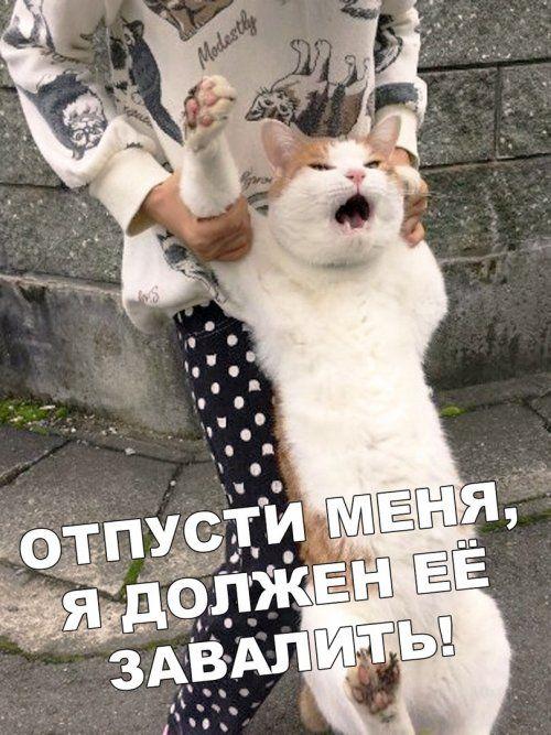 1576888240_kartinki-1.jpg