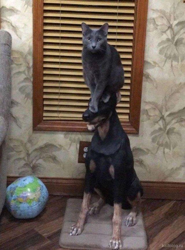 Прикольные коты 2019 года (50 фото)