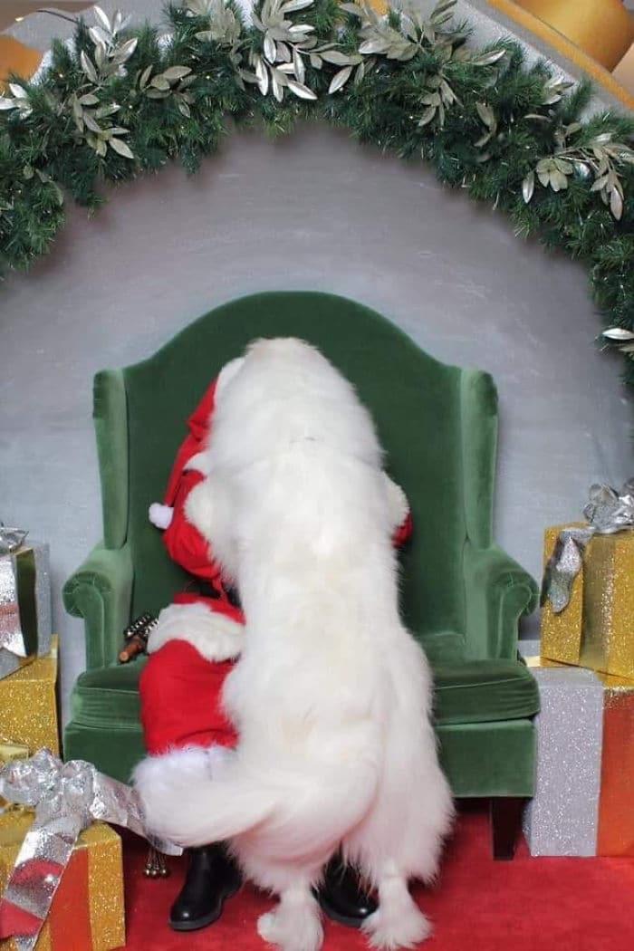 белая собака и санта клаус
