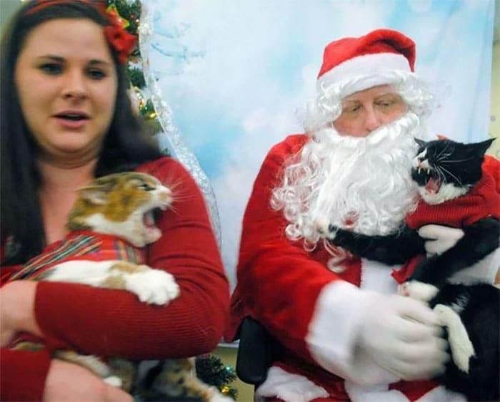 женщина с двумя кошками и санта