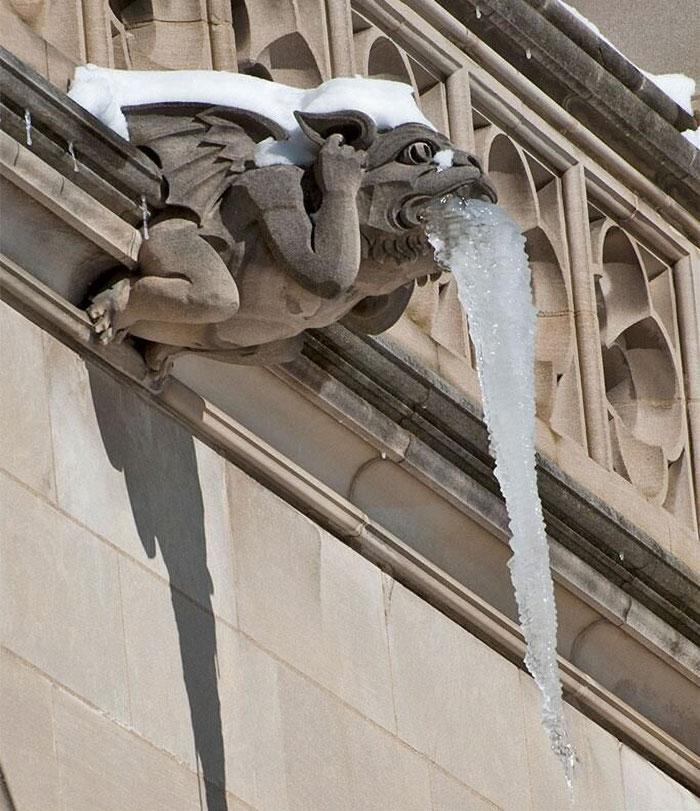 грифон сидит на краю крыши