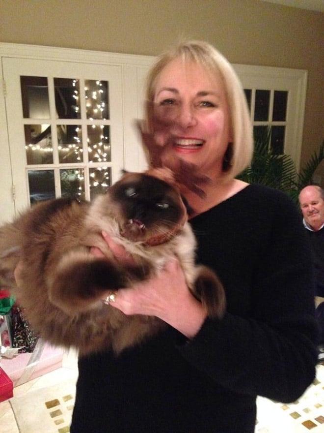 женщина держит сиамскую кошку