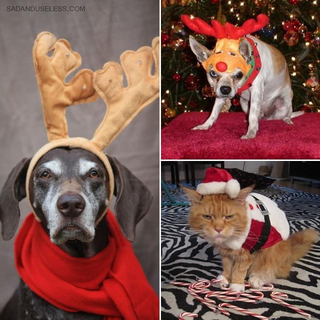 рыжий кот и две собаки в новогодних костюмах