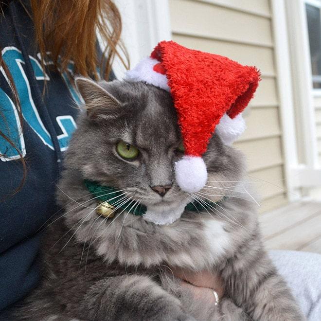 серый кот в шапке санты