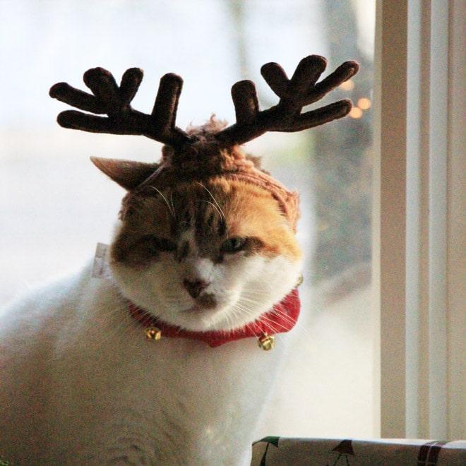 бело-рыжий кот с рогами оленя на голове