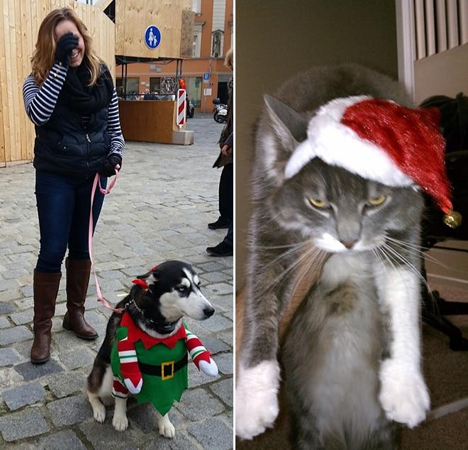 хаски с хозяйкой и серый кот в красном колпаке