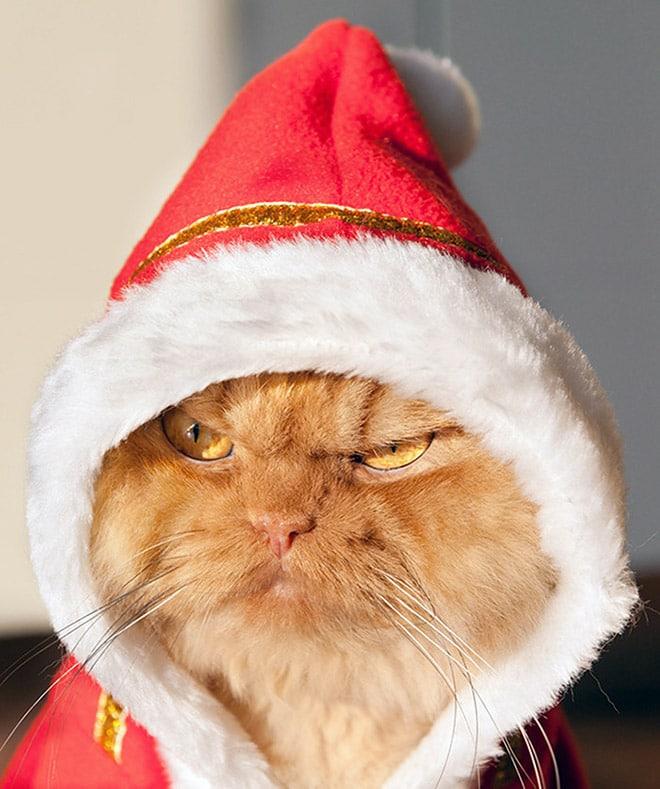рыжий кот в красном колпаке