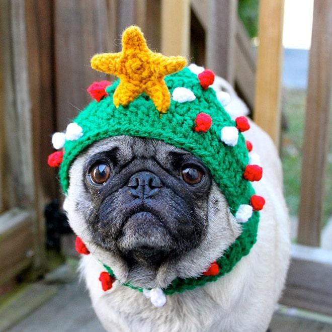 мопс в вязаной зеленой шапке