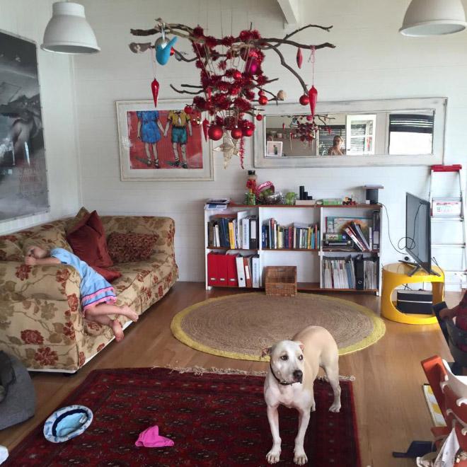 собака в гостиной
