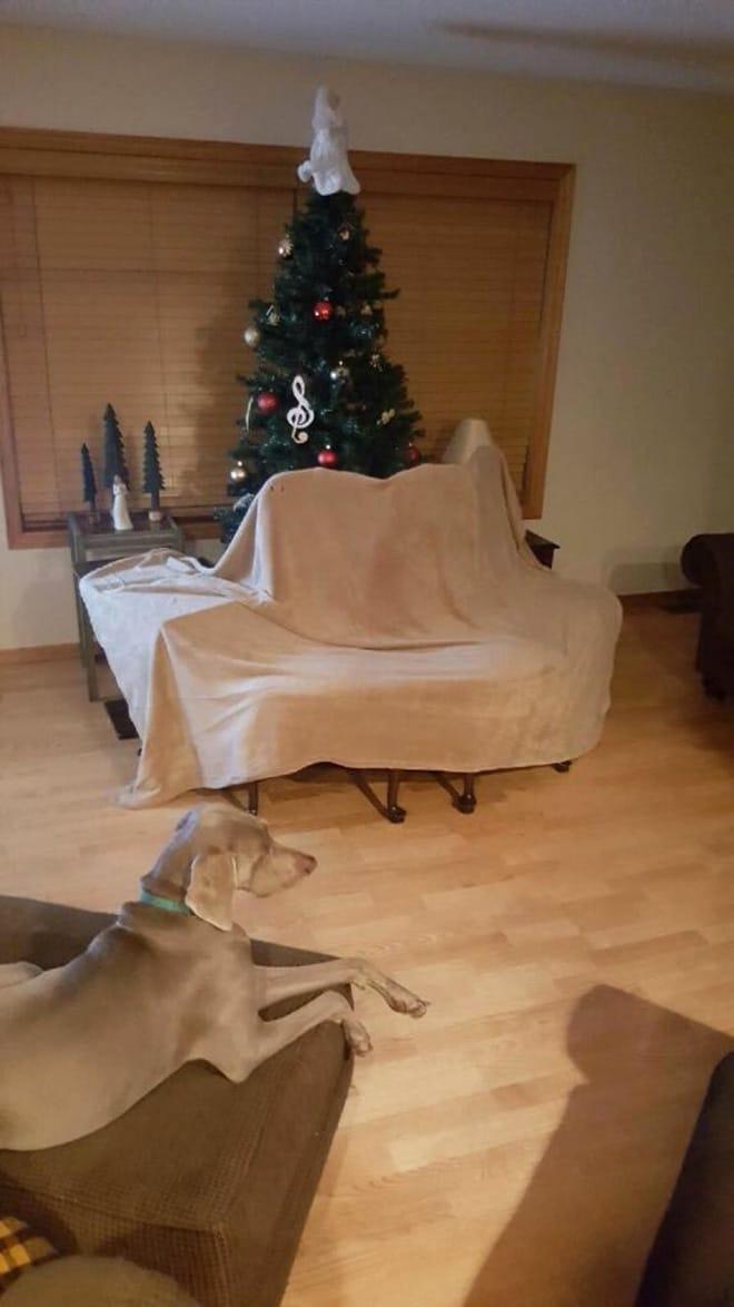 собака в комнате с наряженной елкой