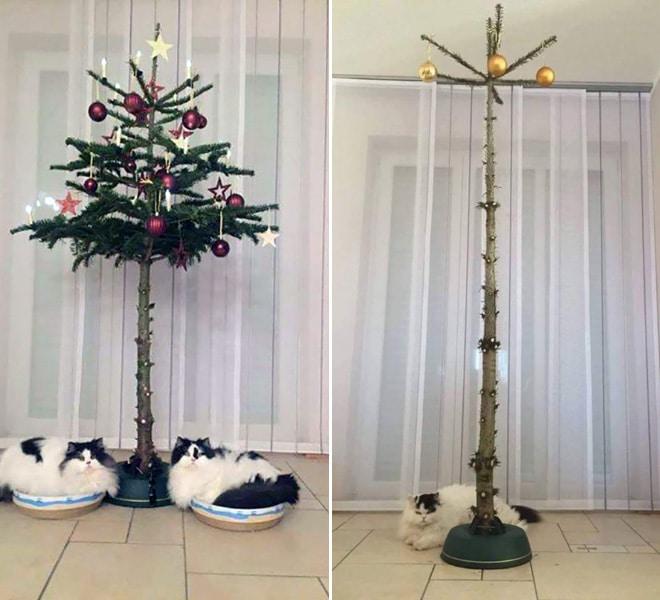 коты лежат под елкой