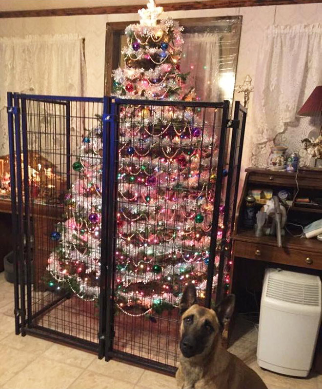 собака и елка за решеткой