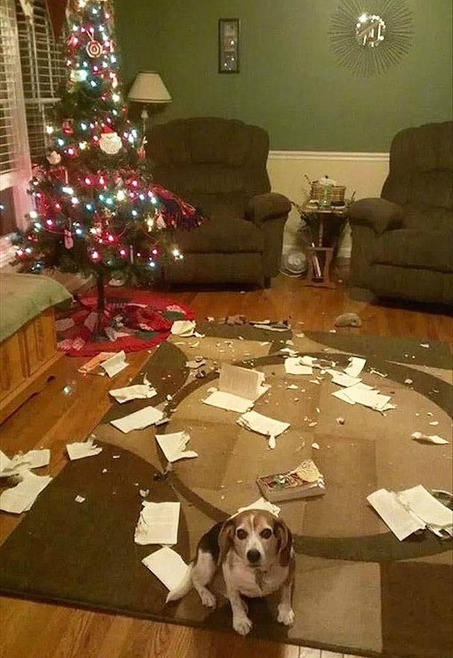 собака в комнате с елкой
