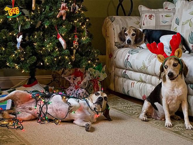 3 собаки возле елки