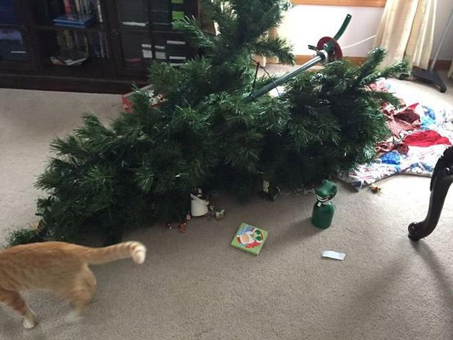 рыжий кот и перевернутая елка