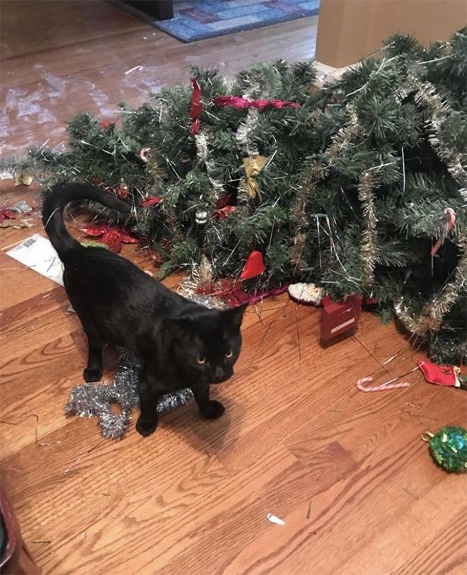 черный кот и елка на полу