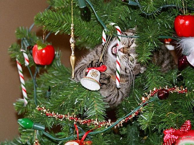 полосатый кот жует игрушку на елке