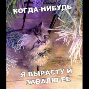 146784_61663.jpg