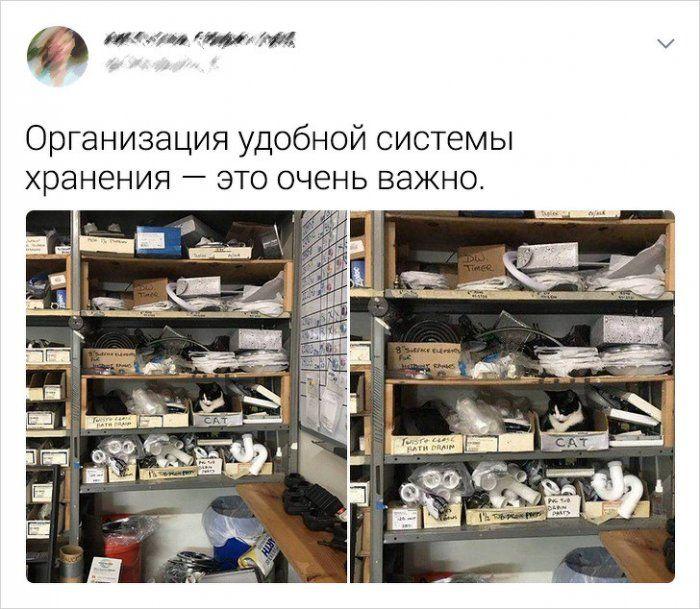 kotah-socsetey-polzovateli-citaty-vkontakte-vkontakte-smeshnye-statusy