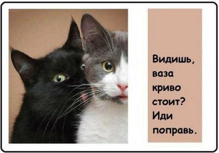 kotovsyachina-kartinki-smeshnye-kartinki-fotoprikoly