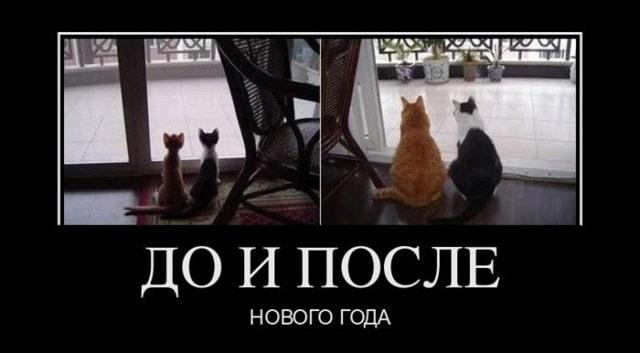 тощие коты и толстые демотиватор