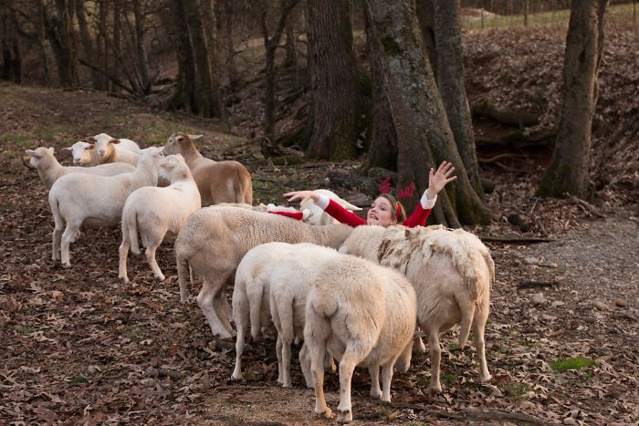 девушка среди овец