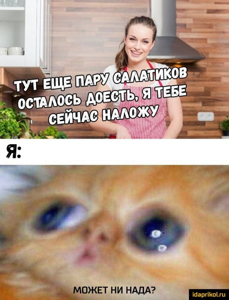 девушка и рыжий кот мем