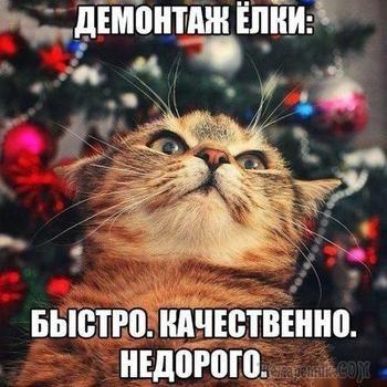 кот на фоне новогодней елки
