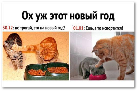 коты возле миски с кормом