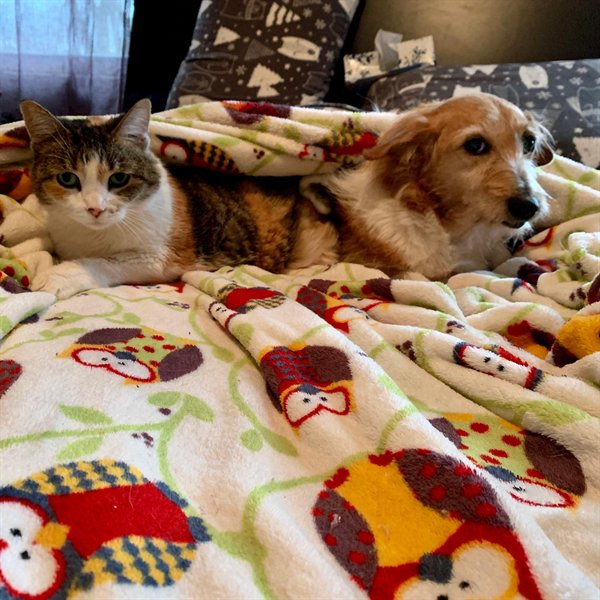 кот и собака под одеялом на кровати