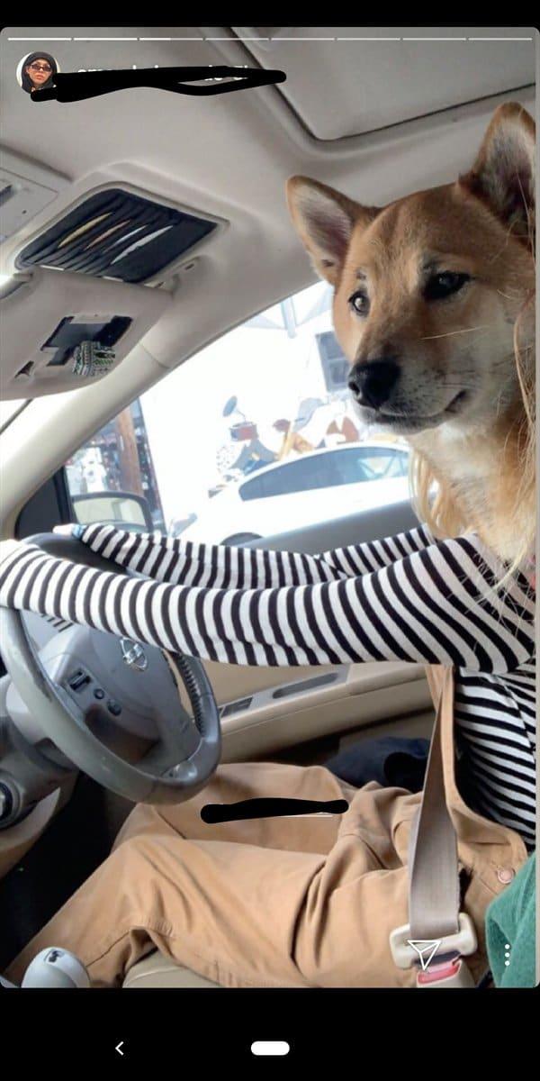 девушка с собакой за рулем