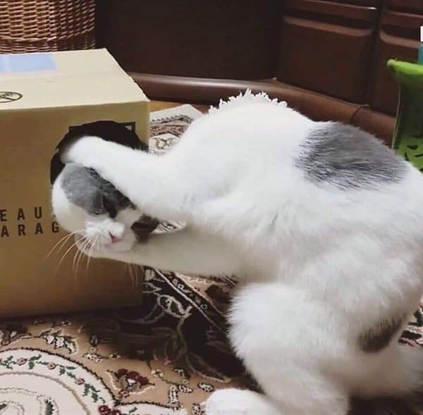 кот тянет из коробки другого кота за голову