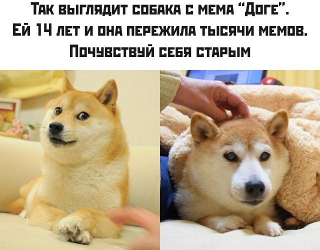 189250_30_trinixy_ru.jpg