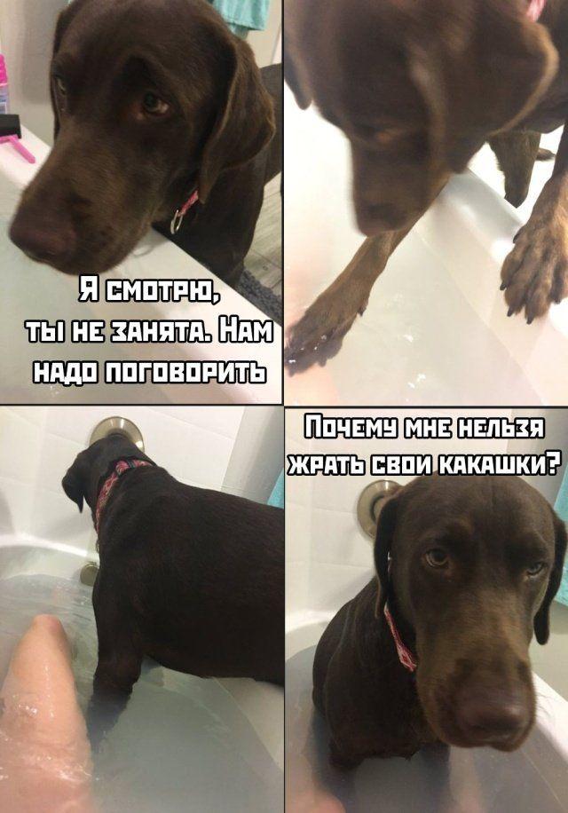 189250_20_trinixy_ru.jpg