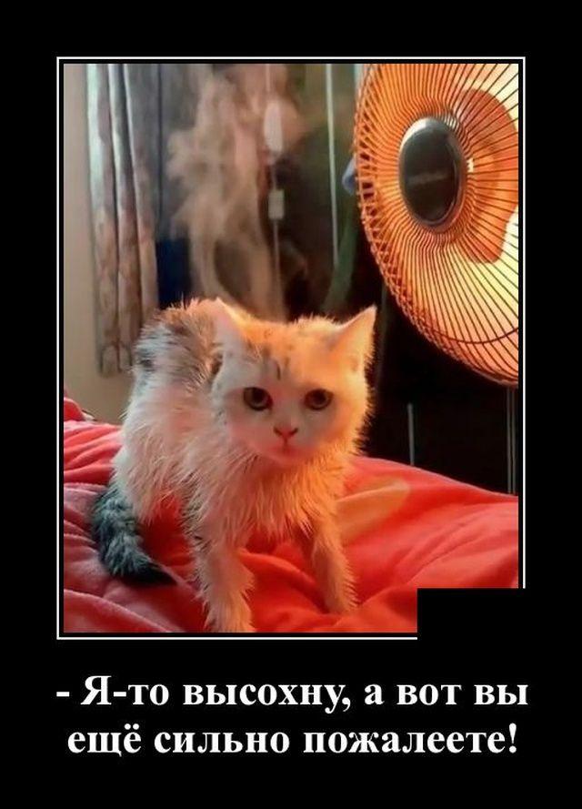 1582292604_demotivatory_10.jpg