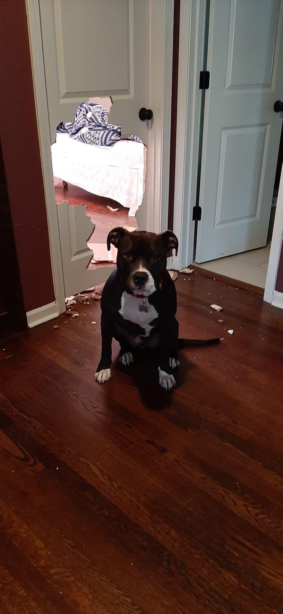 собака сидит рядом с дыркой в двери
