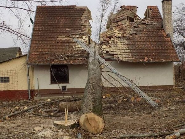 дерево упало на крышу дома