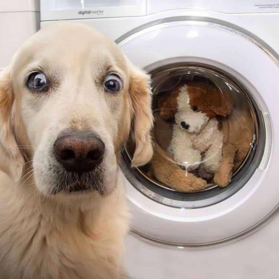 лабрадор рядом со стиральной машиной