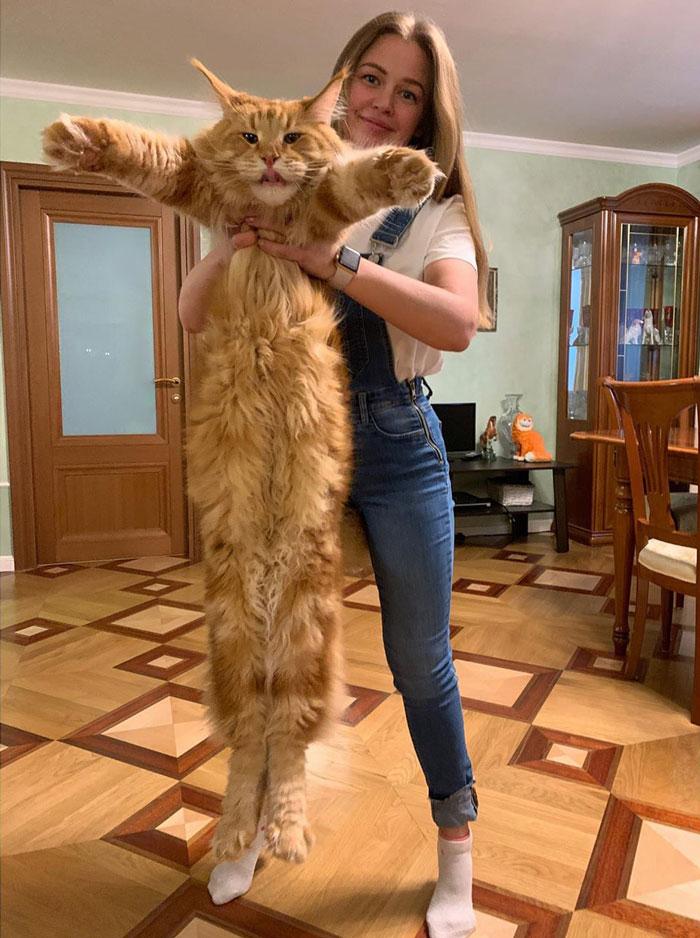 использовали смотреть картинки самых больших котов нужно